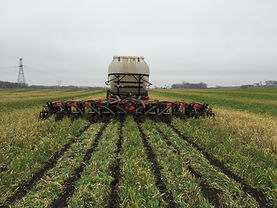 Cover Crop Frieler 11-11-15_09.JPG