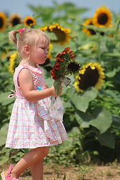 ToddlerSunflowers.JPG