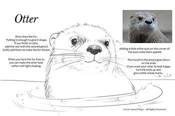 otter lineC.png