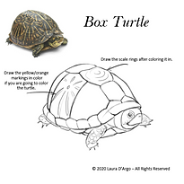 Turtle lineC.png