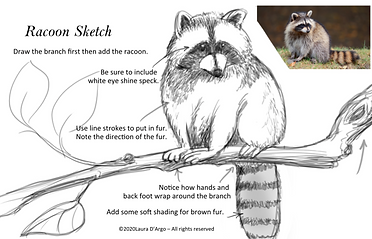 raccoon on branch.png