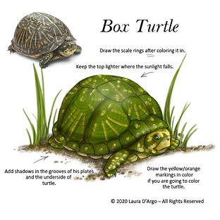 turtle colorC.png