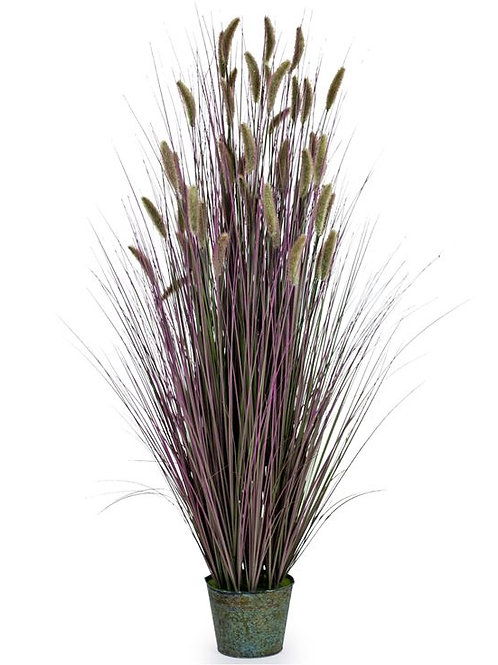 Ornamental Grasses In Galvanised Pot