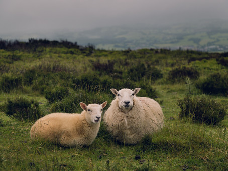 All you need to know about the wool industry