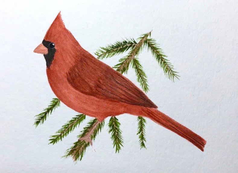 Cardinal on Pine