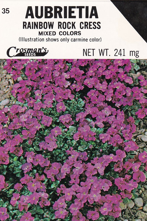 Aubrieta Rainbow Rock Cress Mixed Colors