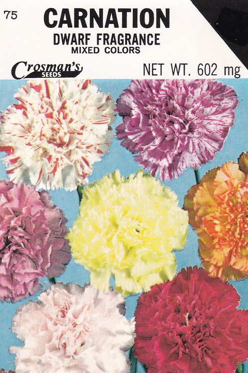 Carnation Dwarf Fragrance Mixed Colors