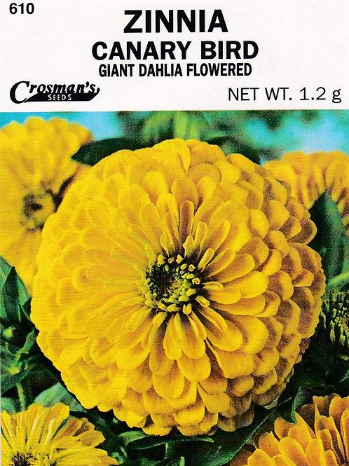 Zinnia Canary Bird Giant Dahlia Flowered