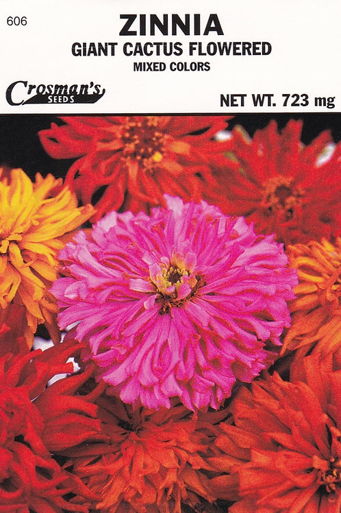 Zinnia Giant Cactus Flowered Mixed Colors