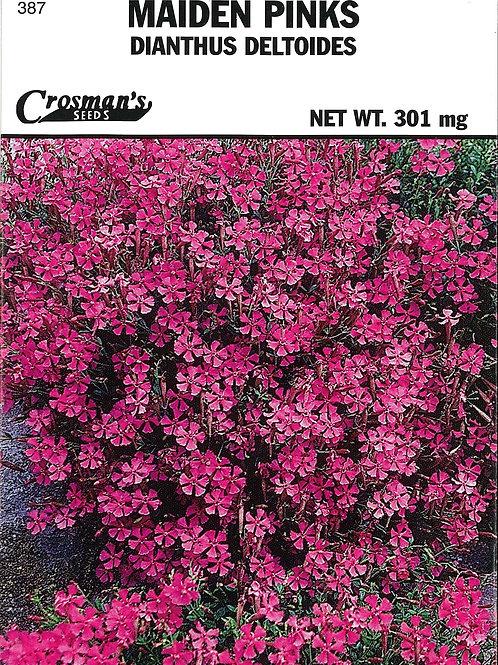 Maiden Pinks Dianthus Deltoides