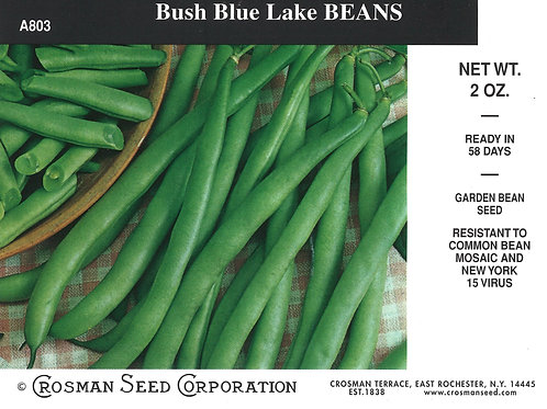 Bean Bush Blue Lake