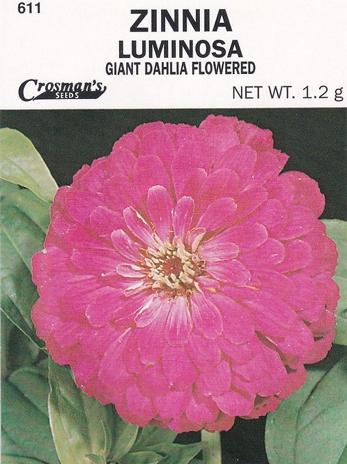 Zinnia Luminosa Giant Dahlia Flowered
