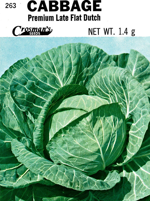 Cabbage Premium Late Flat Dutch