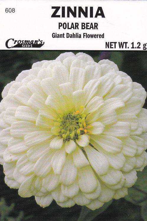 Zinnia Polar Bear Giant Dahlia Flowered