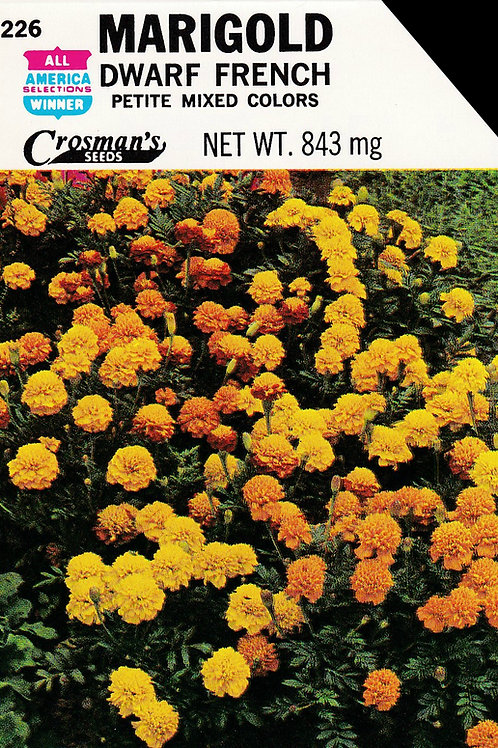 Marigold: Dwarf French Petite Mixed Colors