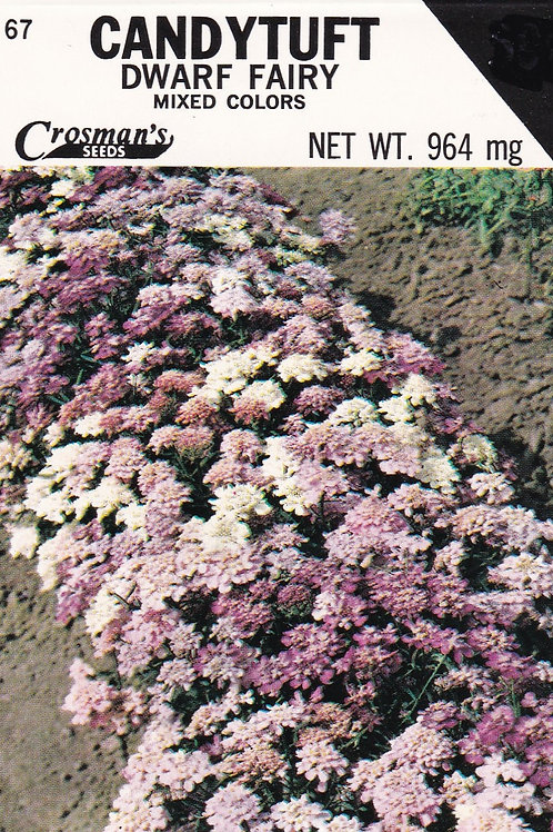 Candytuft Dwarf Fairy Mixed Colors