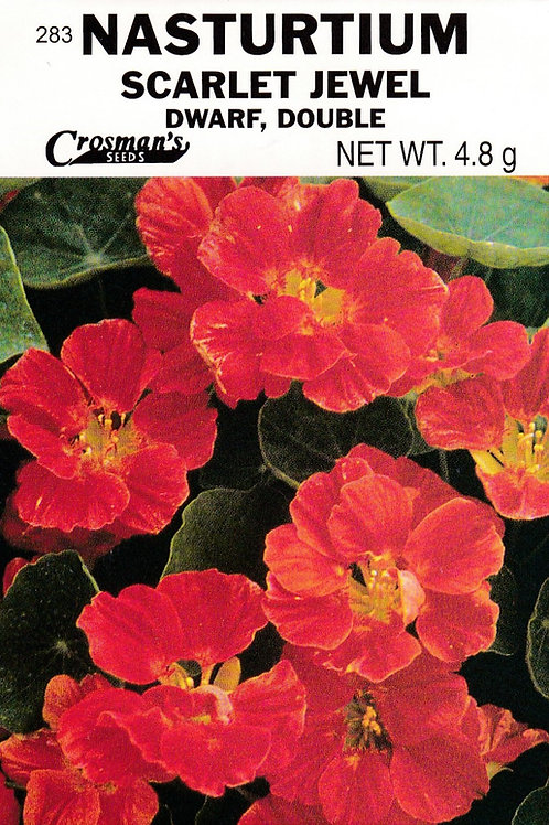 Nasturtium Scarlet Jewel Dwarf Double