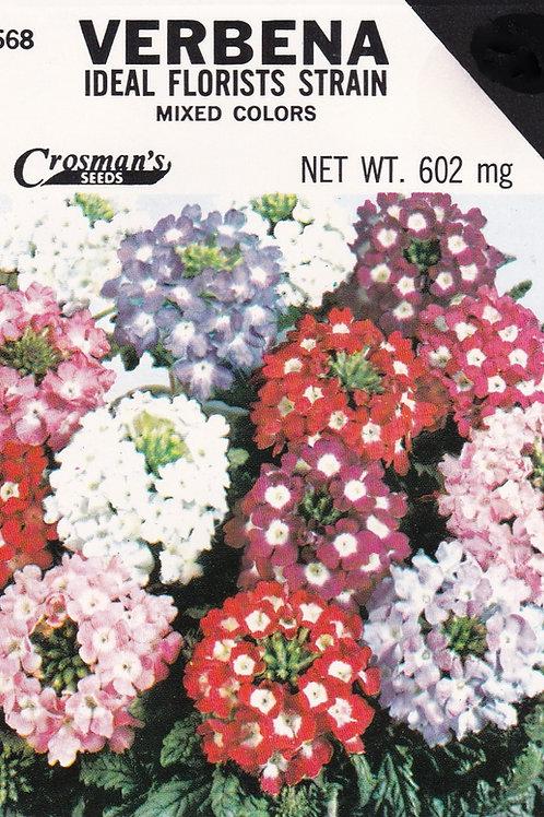 Verbena Ideal Florists Strain Mixed Colors