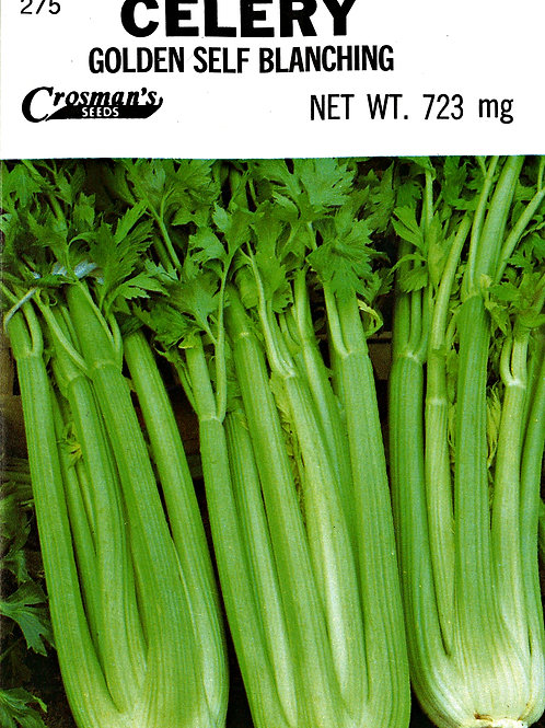 Celery Golden Self Blanching