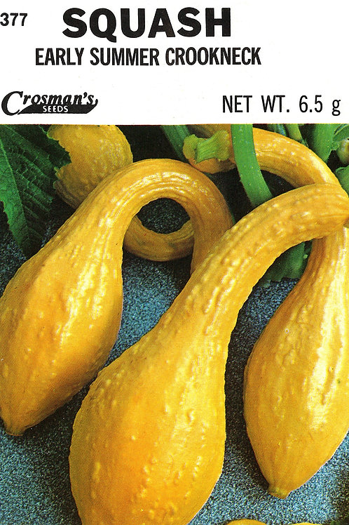 Squash Early Summer Crookneck