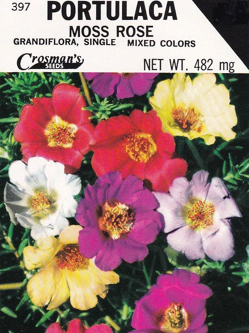 Portulaca, Moss Rose, Grandiflora, Single, Mixed Colors