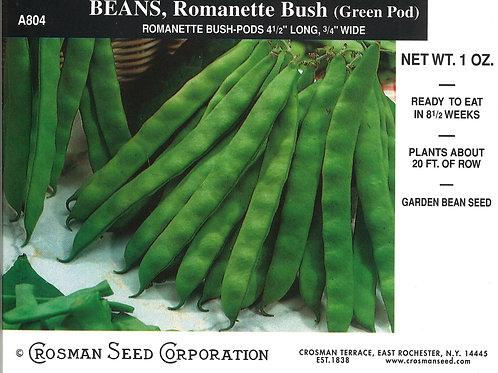 Bean Romanette Bush Green Pod