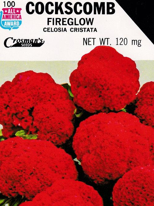 Cockscomb Fireglow Celosia Cristata