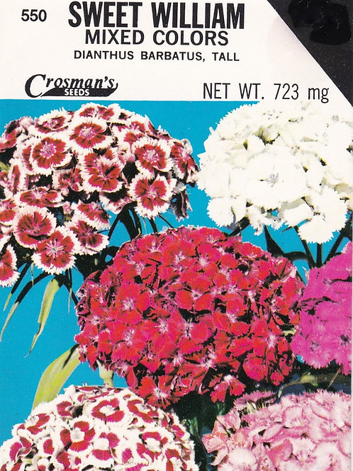 Sweet William Mixed Colors Dianthus Barbatus Tall