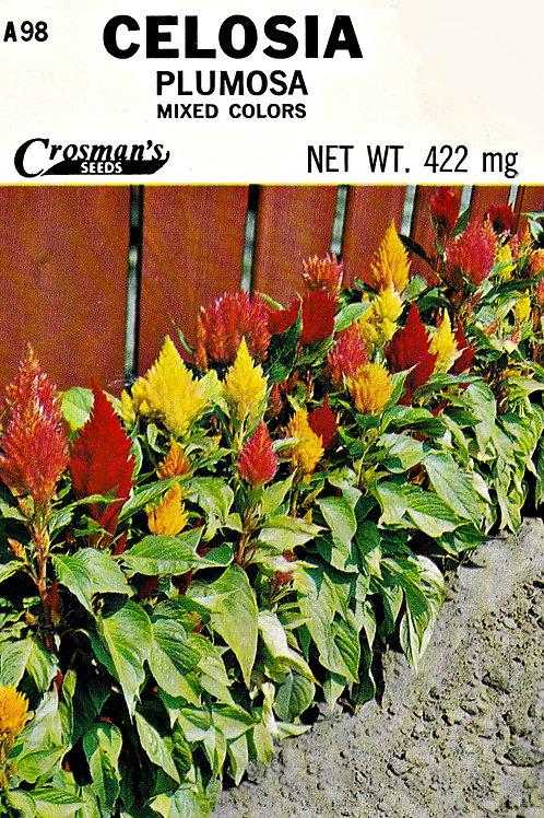 Celosia Plumosa Mixed Colors