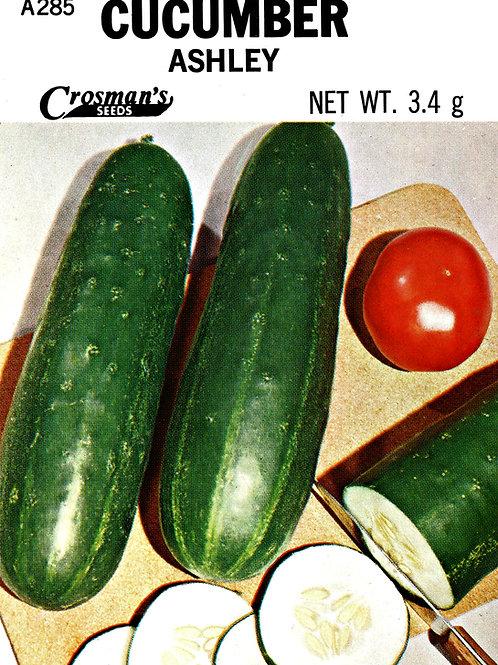 Cucumber Ashley