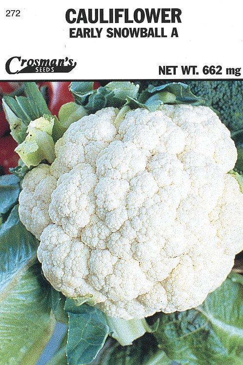 Cauliflower Early Snowball