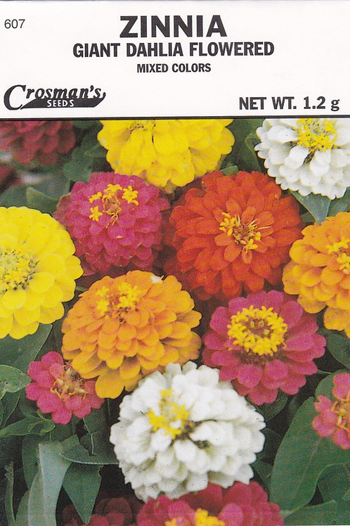 Zinnia Giant Dahlia Flowered Mixed Colors