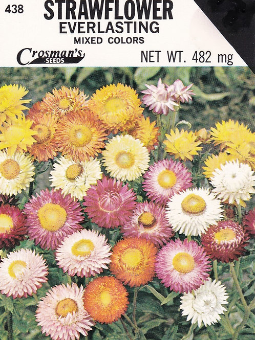 Strawflower Everlasting Mixed Colors