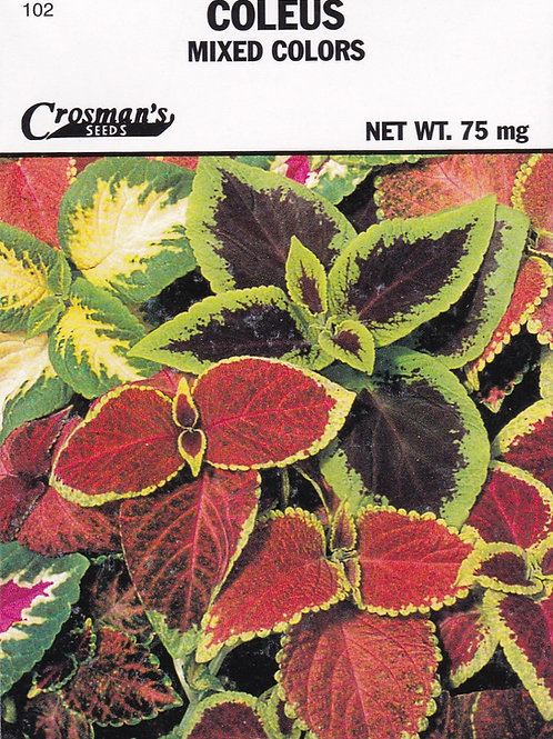 Coleus Mixed Colors