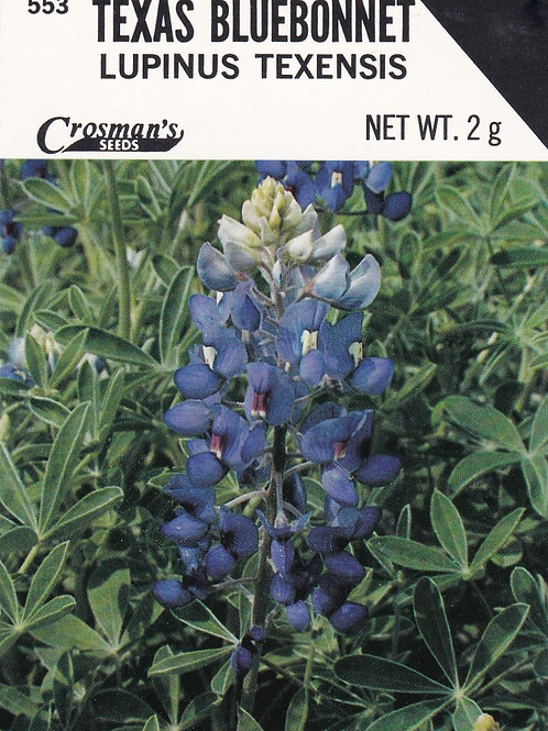 Texas Bluebonnet Lupinus Texensis