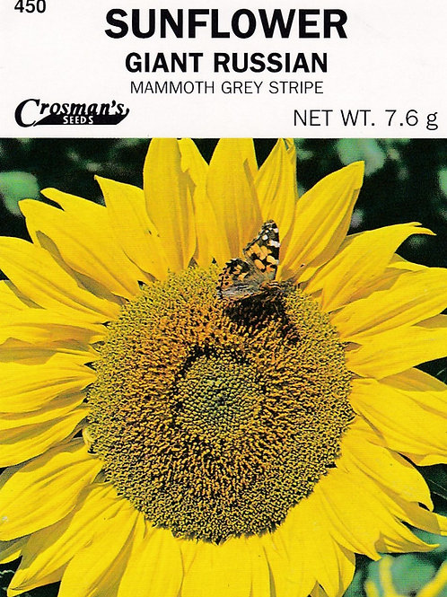 Sunflower Giant Russian Mammoth Grey Stripe