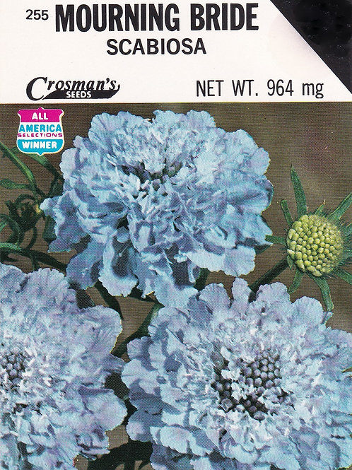 Mourning Bride: Scabiosa