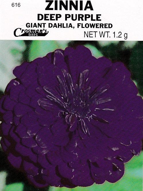 Zinnia Deep Purple Giant Dahlia Flowered