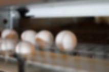 Egg saver.jpg