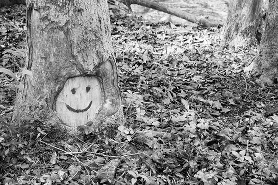 smiling-tree_edited.jpg