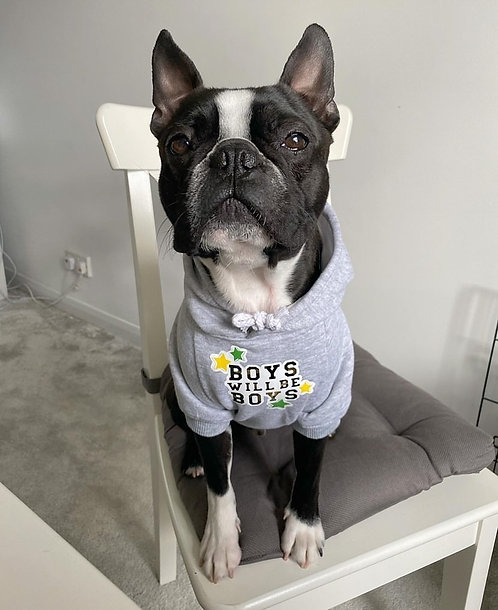 'Boys will be boys' dog hoody