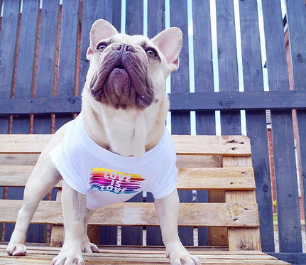 Love is love - dog tee