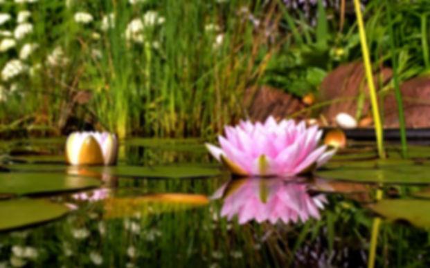 Free-Desktop-Backgrounds-Nature-Flowers-