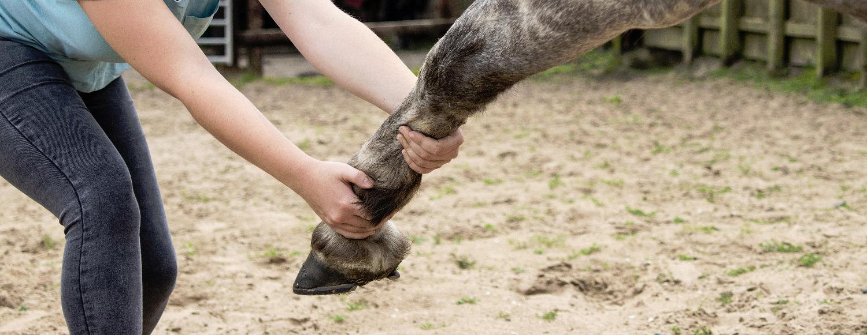 Horse Physio