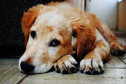 Dog Physio