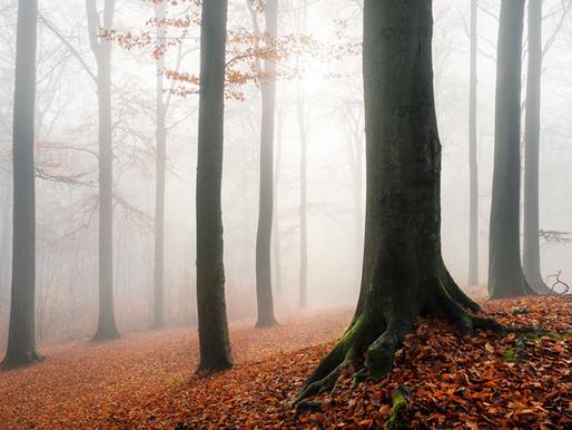 Cinq astuces pour améliorer vos photos de forêt