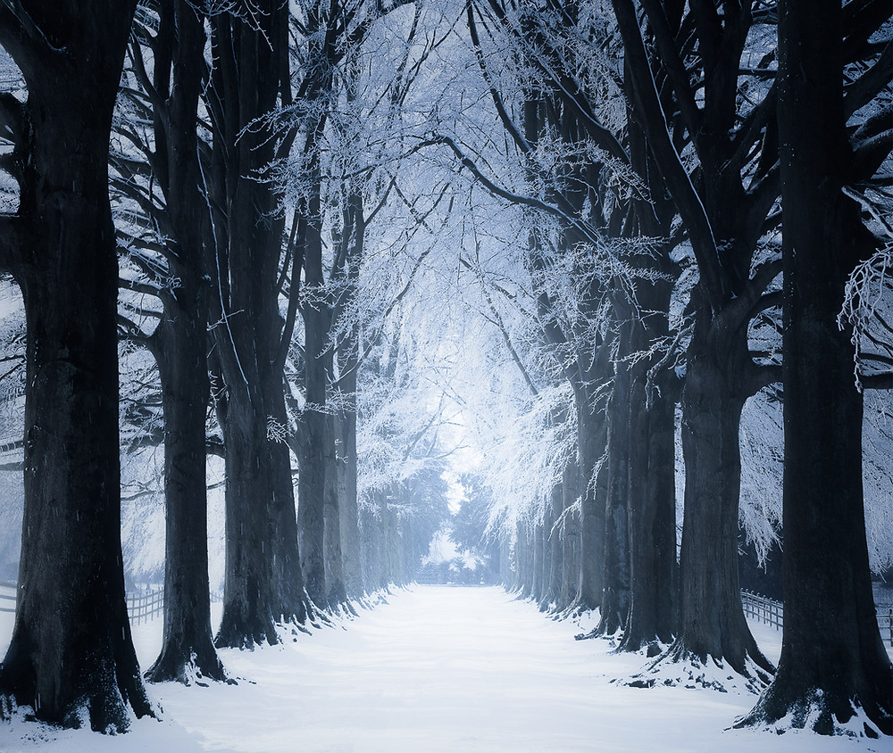 rue avec des arbres gelés en Belgique