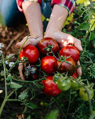 Tomates com gosto de tomates, eu quero_.