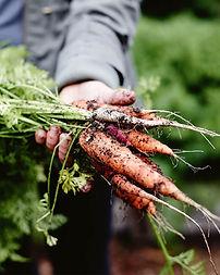 Organic farm Western Australia.jpg