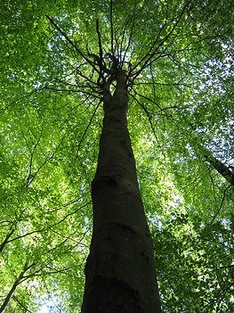this tree (2).JPG